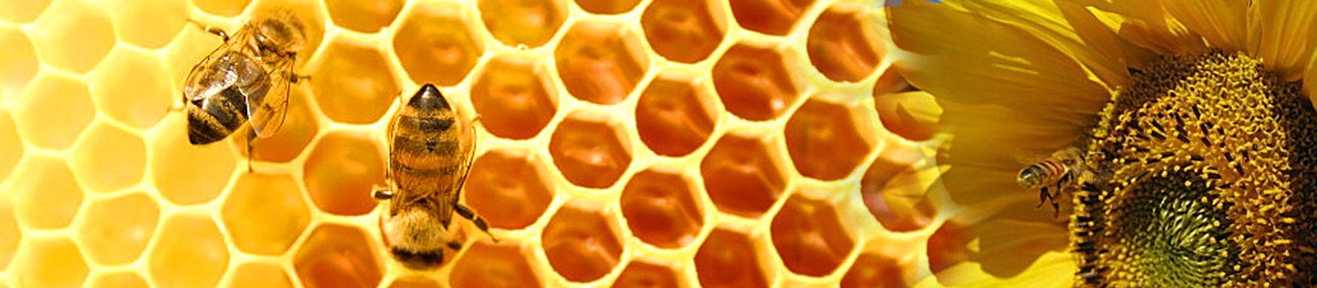 food_bees1